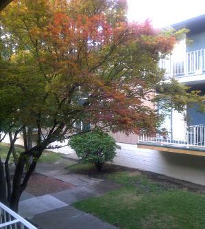 pemandangan dari balkon apartemen