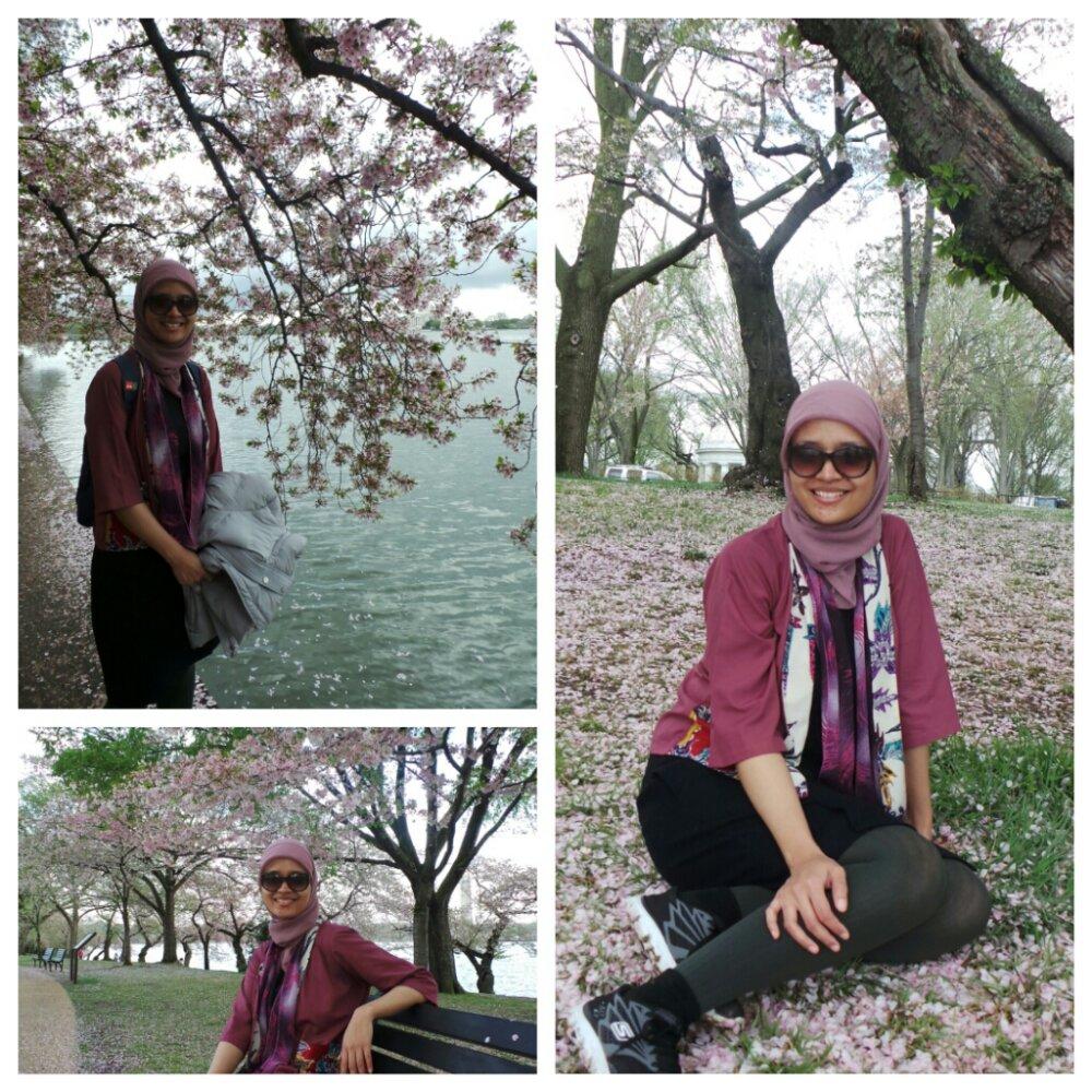 cherry blossom di mana-mana. senaang