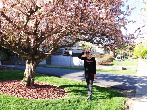 bunga musim semii