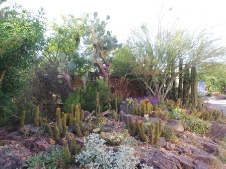 taman kaktus